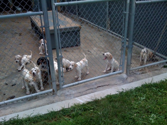 Puppies in the kennel July 2009