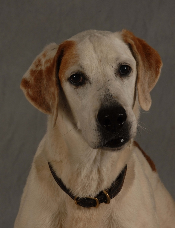 Many thanks to Peggy Maness for these beautiful portraits of Harlequin! You can visit her at manessphotography.com