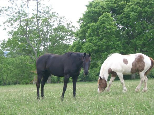 Sassoon horse