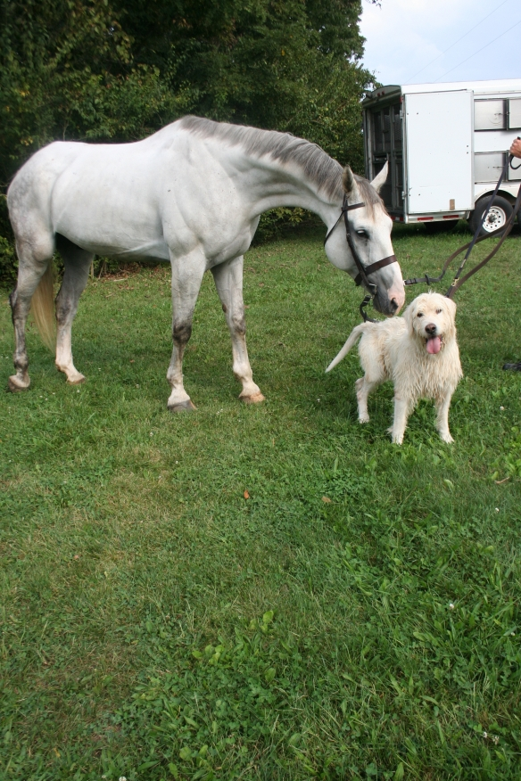 Stalker the horse and Stalker the hound
