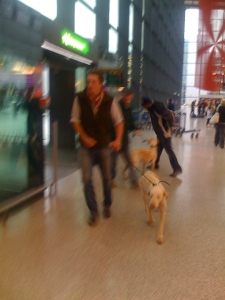 The hounds' arrival: country life comes to the world's second-busiest airport