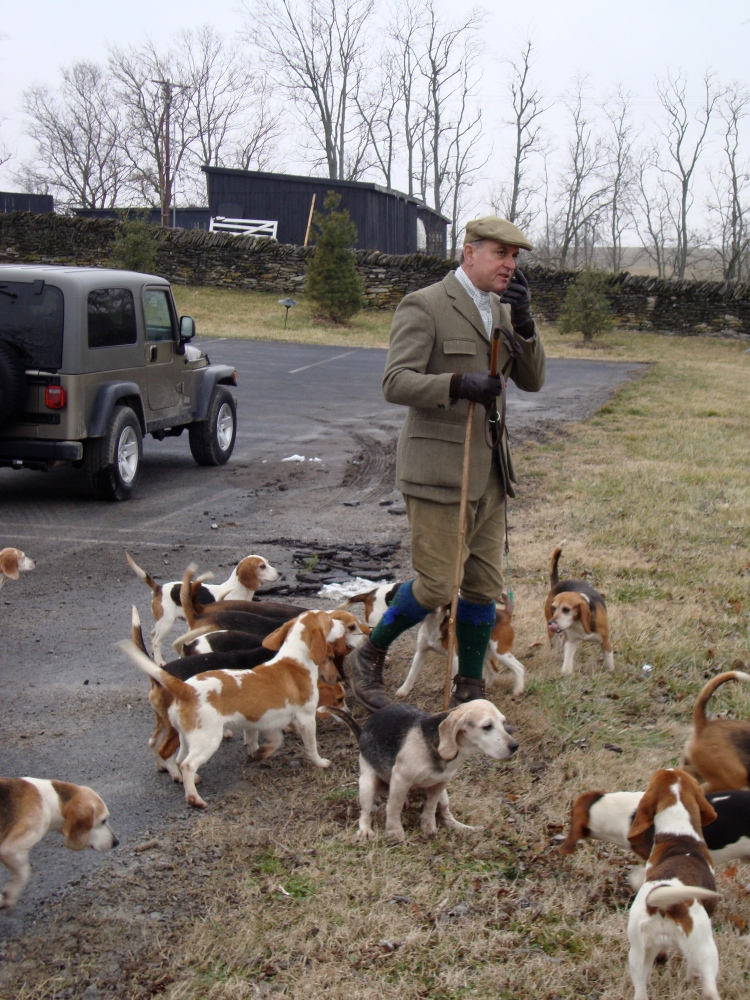Beagles, bassets, and dozens of running bunnies (with two videos!) (1/4)