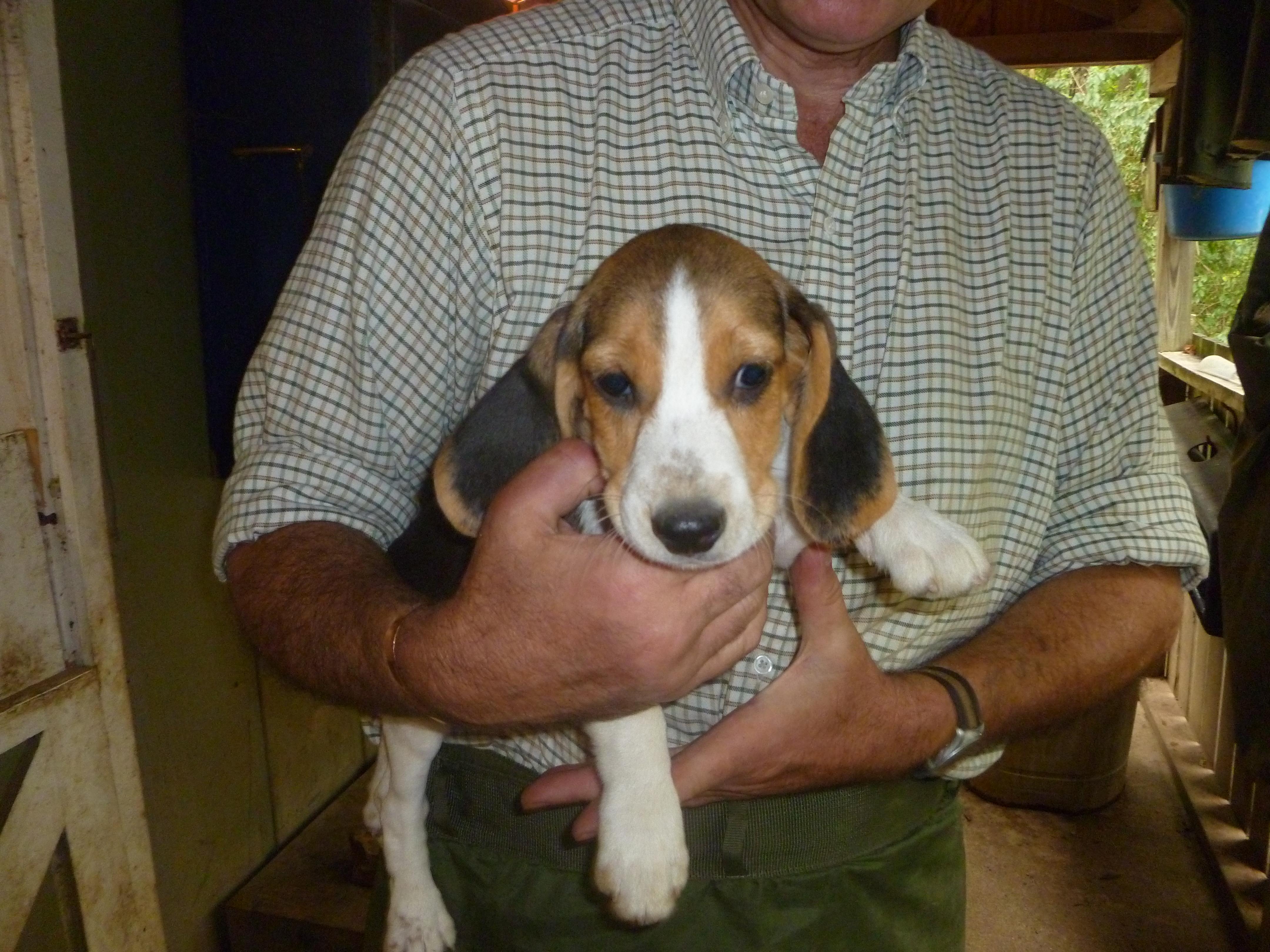 Pocket Beagle Full Size