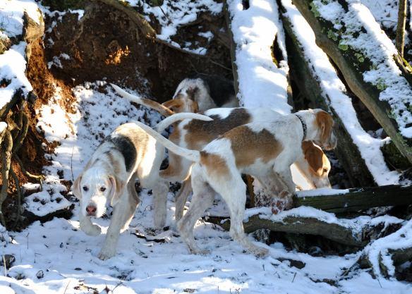 SA puppies Brookfield Traxler 01-15-12